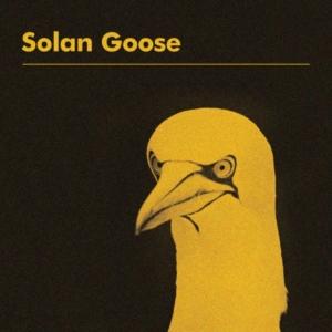 Erland-Cooper-solan-goose-300x300 Les sorties d'albums pop, rock, electro, rap, jazz du 23 mars 2018