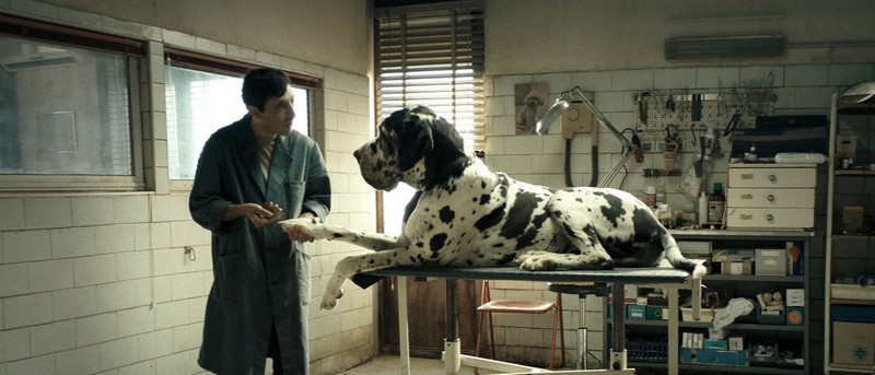 Dogman Les meilleurs films de 2018 - le Top 10
