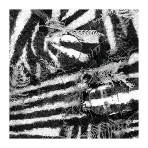 Razzle2BDazzle-300x300 Blackbird Hill – Razzle Dazzle